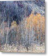 Winter Woodland  Metal Print