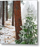 Winter Woodland Pine Tree Metal Print
