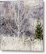 Winter Woodland With Subdued Colors Metal Print
