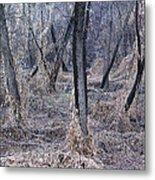 Winter Woods In Missouri 1 Metal Print