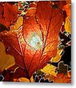 winters autumn in Pasadena Metal Print