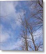 Winter's Blue Sky Metal Print