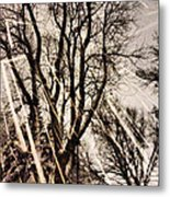 Winters Eve Metal Print