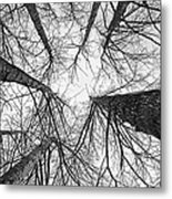 Winter's Forest Metal Print