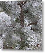 Winter's Gift Metal Print