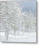 Winter's Glory - Grand Tetons Metal Print
