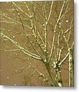Winter's Golden Tree And Suspended Snow Metal Print