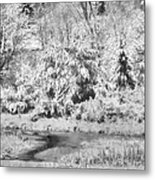 Winter's Grip Metal Print