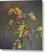 Winter's Oak Sapling Metal Print