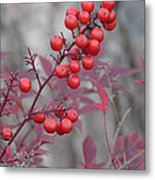 Winter's Red Metal Print