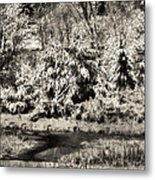 Winter's Sepia Grip Metal Print
