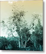 Winter's Tree Metal Print