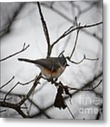 Winter's Tufted Titmouse Metal Print
