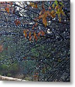 Wintry Florida Morning Metal Print by Julie Cameron