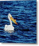 Wisconsin Pelican Metal Print by Thomas Young