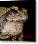Wise Old Frog Metal Print