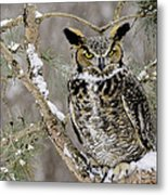 Wise Old Great Horned Owl Metal Print