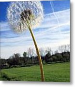 Wishes Or Weeds Metal Print by Andrea Dale