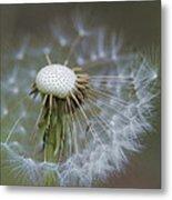 Wispy Dandelion Fluff Metal Print