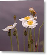 Wispy White Floral Metal Print