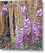 Wisteria And Old Fence Metal Print
