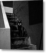 Witch's Cat In Moonlight... Metal Print