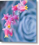 with affection - Echeveria glauca Metal Print