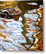 Withdrawn Metal Print