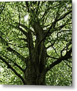 Witness Tree Metal Print