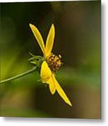 Wodland Flower With Curlicue On Top Metal Print