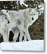 Wolf - Friend Metal Print