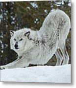 Wolf - Yoga Metal Print