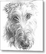 Wolf Hound Pencil Portrait Metal Print