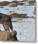 Wolf Pair Metal Print