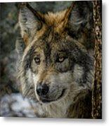 Wolf Upclose 2 Metal Print