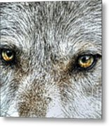 Wolf Wisdom Metal Print