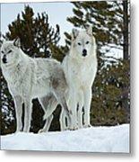 Wolves - Partners Metal Print