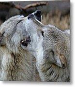 Wolves Playing Metal Print