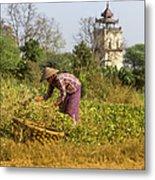 Woman Weeding At Nanmyin Tower Metal Print