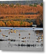 Wonderful Wetlands Metal Print by Al Powell Photography USA