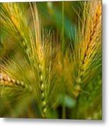 Wonderous Wild Wheat Metal Print