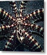 Wonderpus Octopus Metal Print