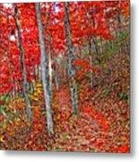 Wonders Of Autumn  Metal Print