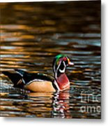 Wood Duck At Morning Metal Print