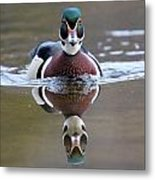 Wood Duck Drake Frontal Metal Print