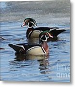 Wood Duck Drake Pair Metal Print