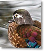 Wood Duck Hen Metal Print
