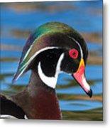 Wood Duck IIi Metal Print