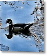 Wood Duck In Motion Metal Print