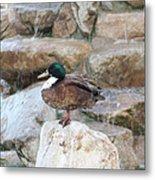 Wood Duck On Fountain Metal Print
